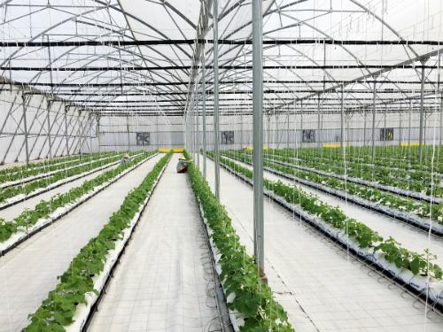 15 nông trường của doanh nghiệpsử dụng nhiều công nghệ canh tác hiện đại, thông minh như nhà kính điều khiển khí hậu (Pháp), canh tác nhiều tầng (Singapore), công nghệ sản xuất nhà màng và tưới thông minh (Israel)&