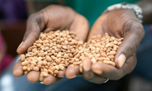 Một người nông dân cầm trên tay những hạt đậu tương thu được từ vụ mùa với sự giúp đỡ từ myAgro. Ảnh: The Gurdian