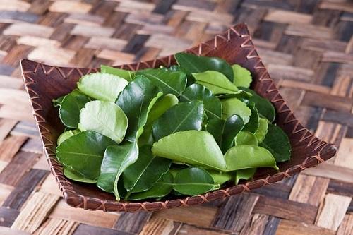 Lá chanh xuất khẩu sang trời Tây với giá cao tạo điều kiện cho nhiều hộ dân tại đồng bằng sông Cửu Long tận dụng trồng chanh để hái lá xuất khẩu.