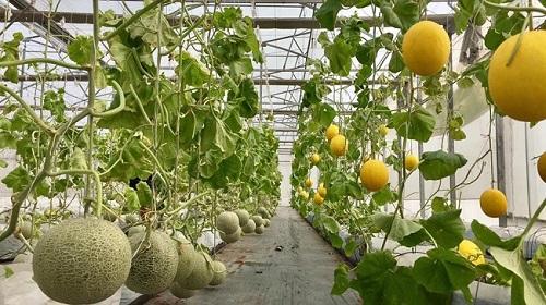 Nông trại áp dụng hệ thống Smart Agri giúp tự động hóa quy trình.