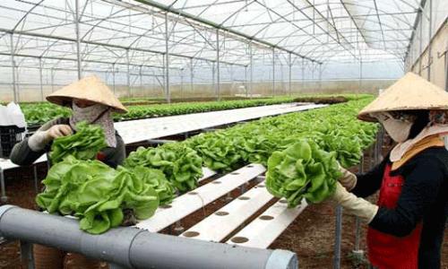 Các dự án nông nghiệp ứng dụng công nghệ cao có nhiều chương trình hỗ trợ tài chính. Ảnh: Anh Minh.