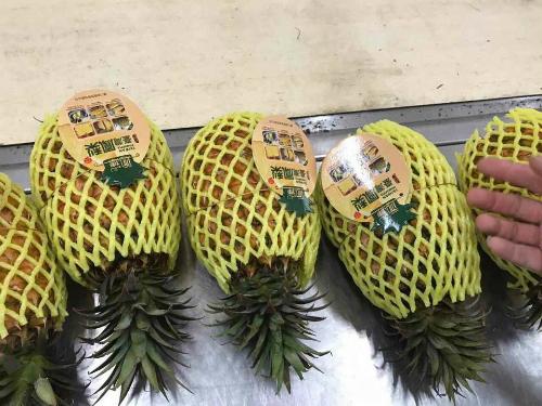 Dứa Đài Loan đang được bán tại Việt Nam với giá đắt đỏ.
