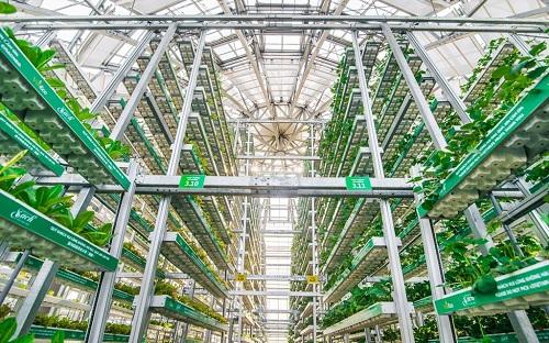 Công nghệ canh tác giá thể nhiều tầng Skygreen (Singapore) tại nông trường VinEco Nam Hội An