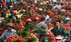 Mỗi ngày Bắc Giang tiêu thụ 6.000 tấn vải thiều