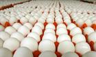 Giá trứng tăng cao