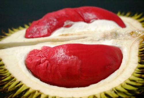 Sầu riêng ruột đỏ Malaysia mang về Việt Nam bán với giá cao. Ảnh: YD.