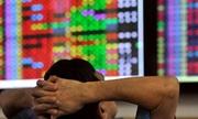 'Cá mập' chứng khoán cũng lao đao vì đà giảm của thị trường
