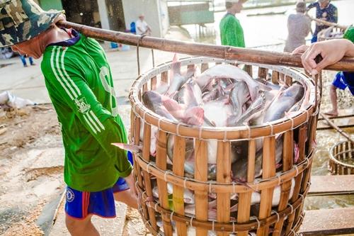 Agifish lỗ đậm do giá nguyên liệu tăng mạnh trong nửa đầu 2018. Ảnh: Agifish.