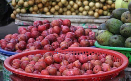 Mùa mận Hà Nội không còn nhiều nhưng tại các chợ sản phẩm này vẫn bán đầy với giá rẻ. Ảnh: Thi Hà