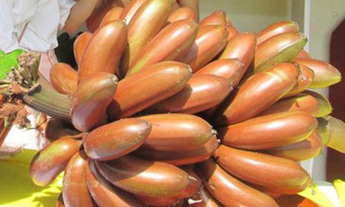 Chuối đỏ xuất hiện tại một hội chợ nông nghiệp diễn ra tại TP HCM chào giá 400.000 đồng một kg. Ảnh: Người Lao Động