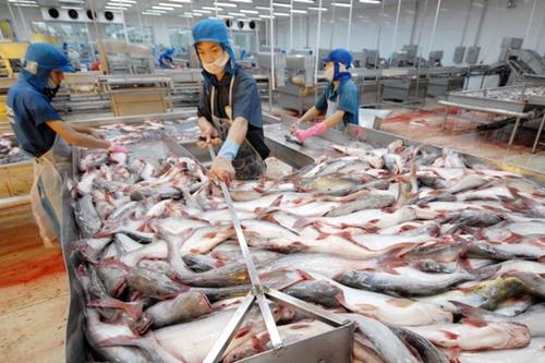 Hoạt động sơ chế cá tra của công nhân Công ty cổ phần Hùng Vương.