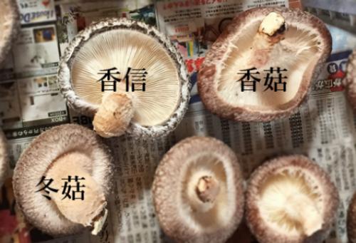 Nấm Shiitake Koko (trên bên phải), nấm Shiitake Koshin (trên bên trái) và nấm Shiitake Donko.