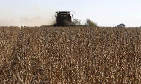 Đậu tương đang được thu hoạch tại một cánh đồng. Ảnh: Reuters