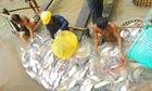 VASEP: Cá tra Việt bị 'bôi xấu' ở châu Âu