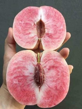 Ruột trái đào hồng chứ không vàng như loại đào tiên thông thường.