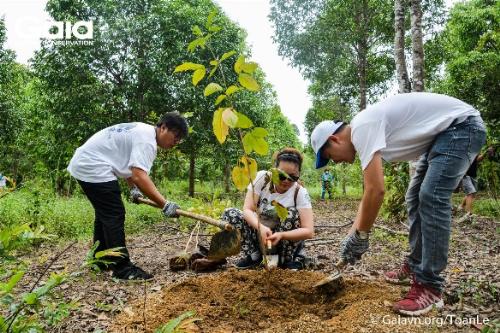 Hoạt động bảo tồn rừng tuy vẫn còn mới mẻ tại Việt Nam nhưng đã thu hút hàng nghìn người trẻ cùng chung tay với GAIA.