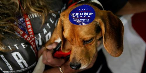 Một con chó được dán tem ủng hộ ông Donald Trump trong chiến dịch tranh cử tổng thống. Ảnh: Reuters