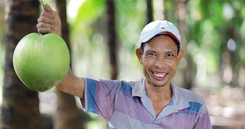 Những trái dừa được trồng theo chuẩn organic nghiêm ngặt được bạn bè quốc tế đánh giá cao