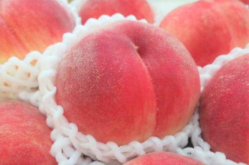 Những trái cây Nhật có giá gấp chục lần hàng Việt - 2