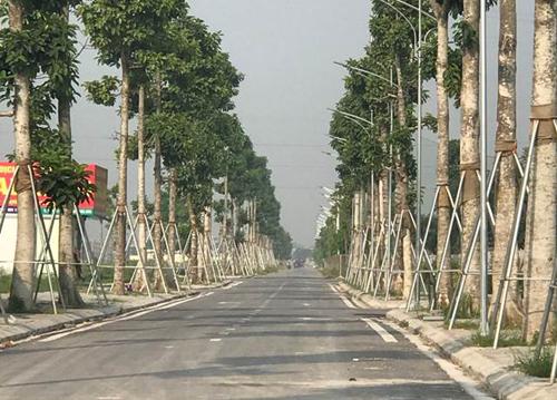 Tuyến giao thông nội đô thị cơ bản hoàn thành với những hàng cây rợp bóng mát để đón chào cư dân.