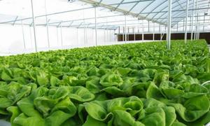 Có 3 tỷ đồng về làm trang trại rau sạch hay ở Sài Gòn đầu tư đất?