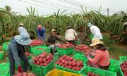 Doanh nghiệp Việt chậm chân ở thị trường ASEAN