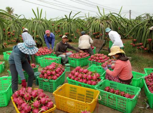 Trái cây cũng là một mặt hàng thế mạnh của Việt Nam.