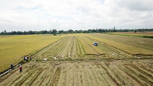 Mở ra tiềm năng canh tác lớn cho các nông hộ nhỏ ở Đồng Tháp, Việt Nam