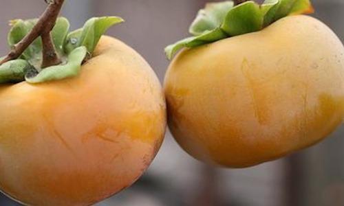 Hồng giòn Đà Lạt năm nay mất mùa, trái hồng thường có màu nhạt chứ không đậm như hàng Trung Quốc.