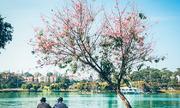 Đà Lạt - thành phố du lịch 'đói' điểm mua sắm