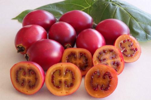 Cà chua thân gỗ khi mới xuất hiện giá cả triệu đồng nhưng nay bán không ai mua.