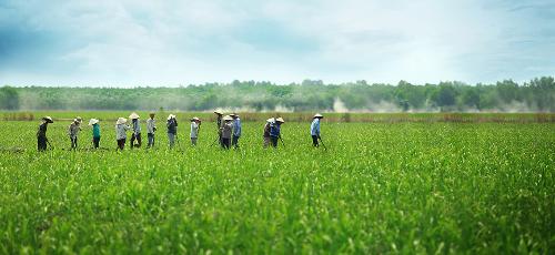 Việt Nam và Malaysia có nền kinh tế nông nghiệp giàu tiềm năng.