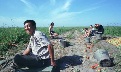 Hàng triệu người Trung Quốc rời phố về quê làm nông nghiệp