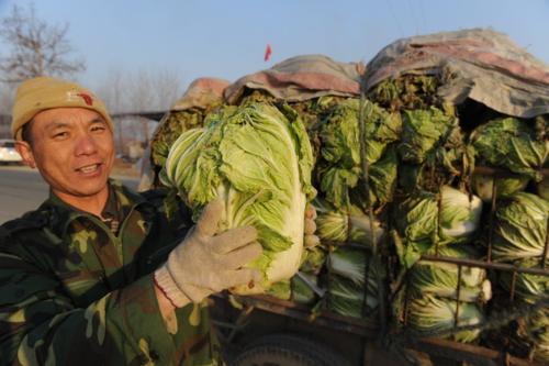 Nông dân đang chuẩn bị bán bắp cải ở Thanh Đảo, Sơn Đông, Trung Quốc. Ảnh: AFP