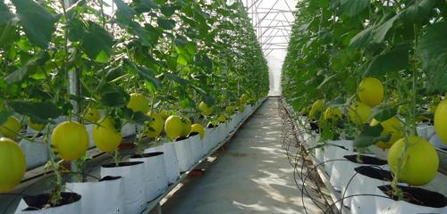 Phát triển vùng trồng để có sản phẩm sạch, từ nguyên liệu đến thành phẩm