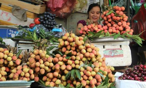 Sau hai năm nỗ lực xuất khẩu, vải thiều Việt Nam đã tìm được chỗ đứng. Ảnh: Hồng Châu.