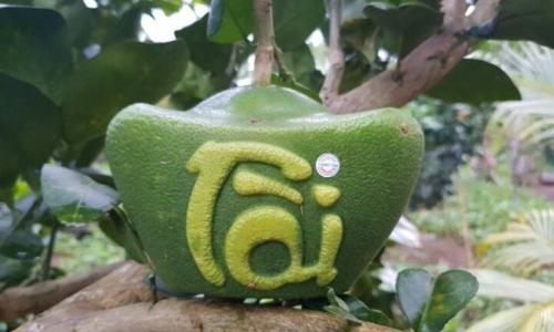Những trái cây chưng Tết hút khách - 2