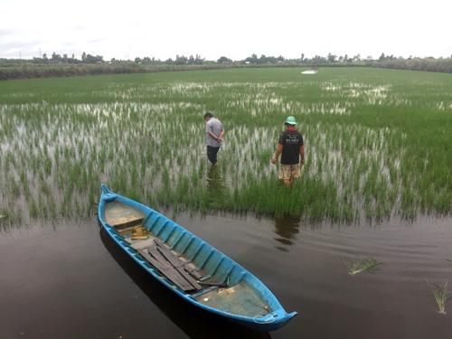 Doanh nghiệp phối hợp Chi cục Bảo Vệ Thực Vật tỉnh Cà Mau kiểm tra một số mẫu ruộng bị sâu hại và hướng dẫn chăm sóc.