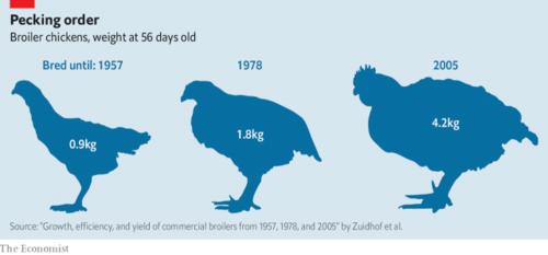 Trọng lượng trung bình một con gà thịt 56 ngày tuổi vào các năm.