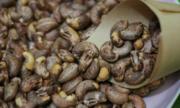 Xuất khẩu hạt điều tăng nhẹ
