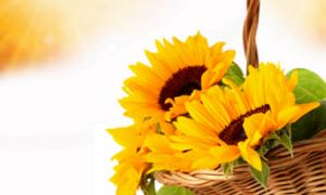 Cách chọn hoa sinh nhật cho 12 tháng sinh