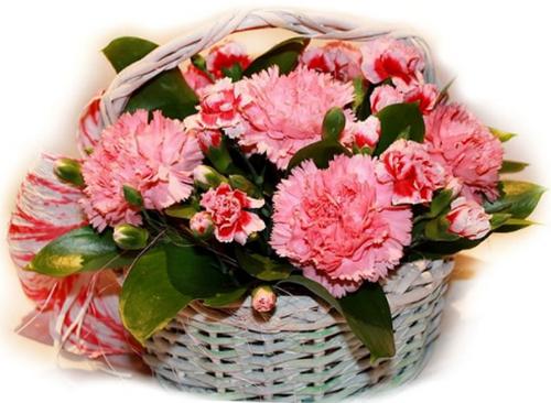 Hoa cẩm chướng phù hợp để dành tặng những người sinh tháng 1.