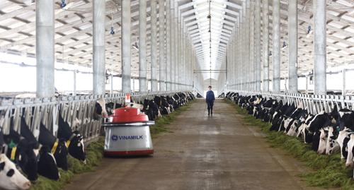 Toàn bộ bò giống tại các trang trại của Vinamilk đượcnhập khẩu từ Australia, Mỹ và New Zealand.