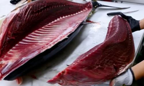 Cá ngừ xuất sang Mỹ tăng trở lại.