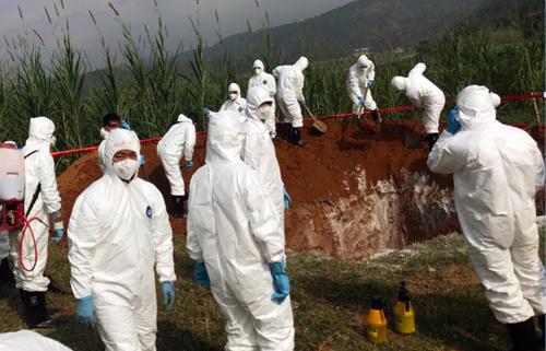 Cơ quan chức năng diễn tập ngăn chặn dịch tả lợn châu Phi xâm nhiễm vào Việt Nam tại Lào Cai cuối năm 2018. Ảnh: Bộ NN.