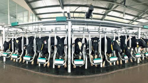 Vinamilk tiếp tục nhập 1.600 bò đặc chủng HF và A2 từ Mỹ - 2