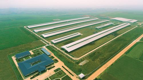 Vinamilk tiếp tục nhập 1.600 bò đặc chủng HF và A2 từ Mỹ - 3