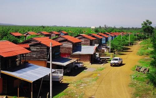 Một góc nông trường của Hoàng Anh Gia Lai.