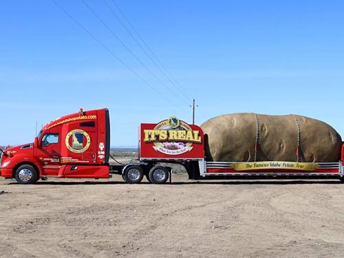 Củ khoai tây mô hình hi còn lưu diễn khắp nước Mỹ. Ảnh: AP