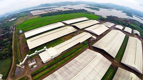 Toàn cảnhMô hình trang trại công nghệ cao tỷ đô của TH Group